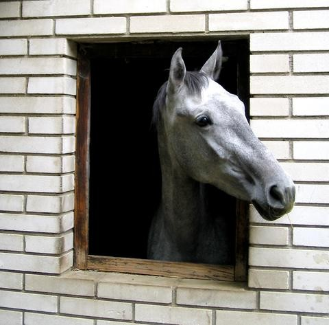 horse-in-window-1363057-1279x1260_ff11a3b2-59c1-4ce6-bef2-90d8c26df72c_largeVQfafcN6lcb2N